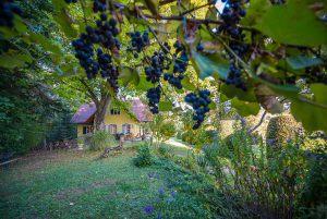 dbi_winemakers_19